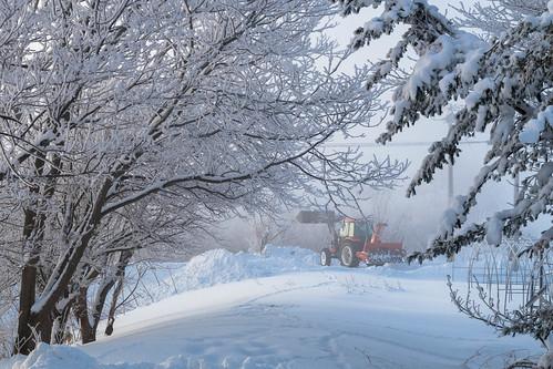 White snow in Hokkaido