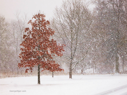 Copper Leaves in a Snow Storm