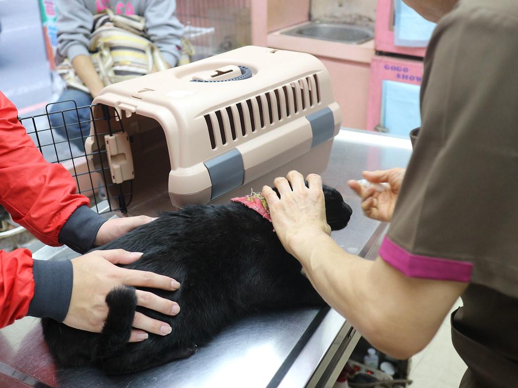 基隆汎汶動物醫院 (60)