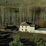 Fotos de Alcaucín