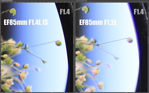 EF85mm F1.4L IS vs EF85mm F1.2L_11