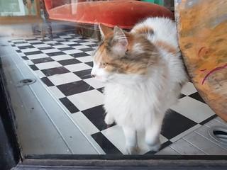 Vintage Store Cat