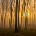 soleil pénètrant , brume. by gillesfournier005
