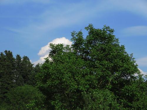 20170614 04 439 Jakobus Wolken Wald