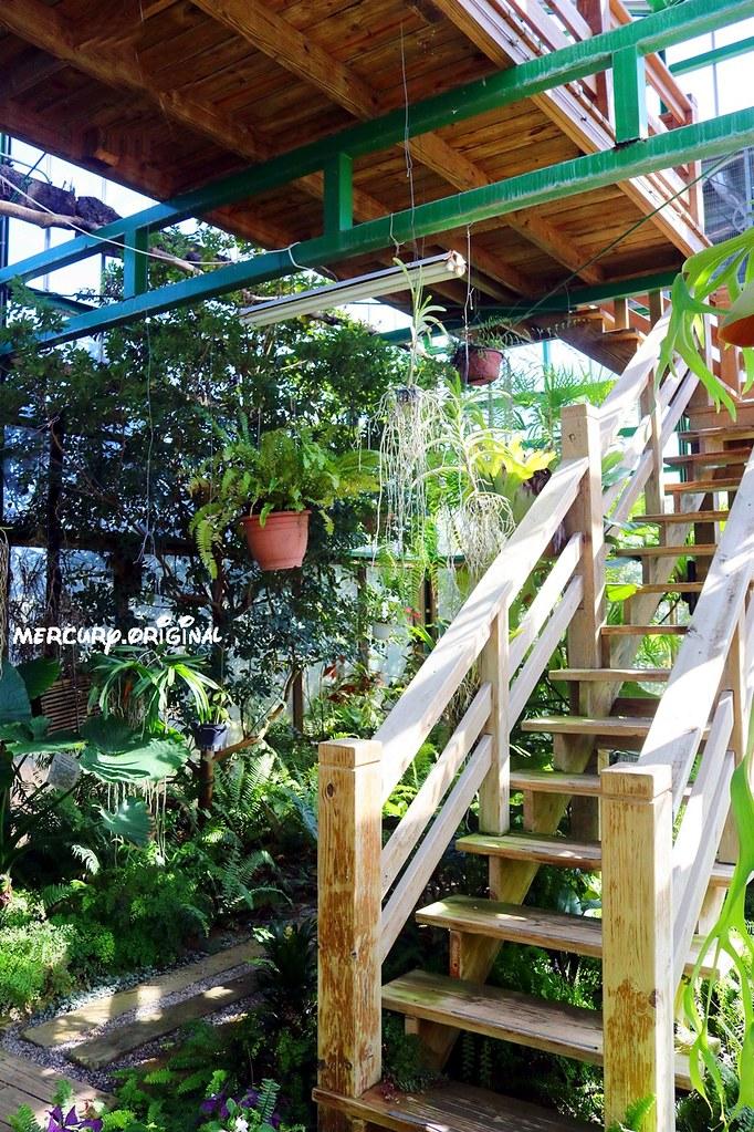 27410082139 750318b1f3 b - 熱血採訪|新社千樺花園餐廳,森林裡的玻璃屋咖啡廳,品嚐無菜單法式料理