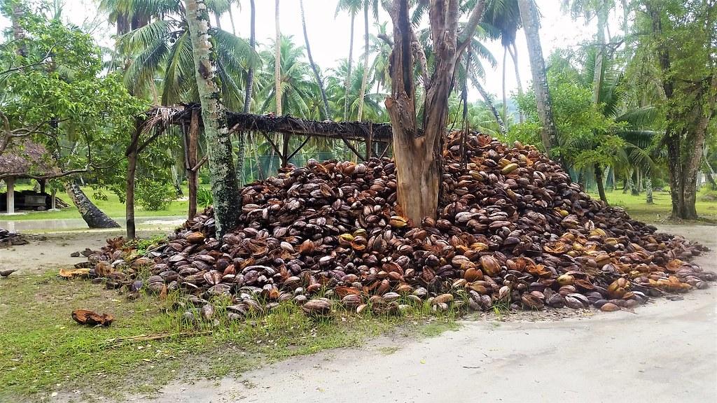 Orzech kokosowy, suszenie, La Digue