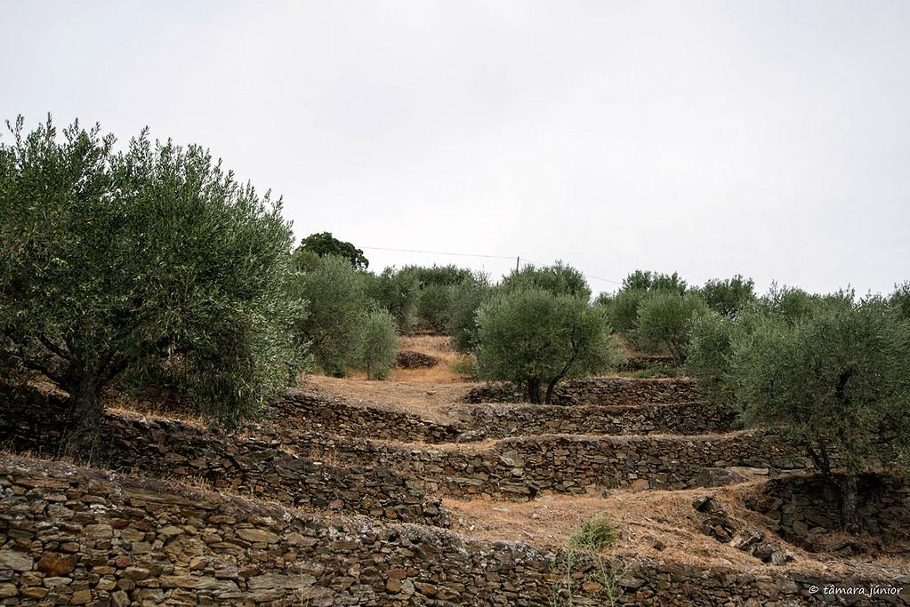 207.- Anos Angélica (Quinta Barroca-Amares) (133)