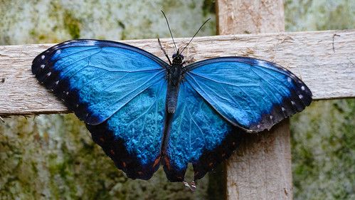 Stratford Butterfly Farm: butterfly