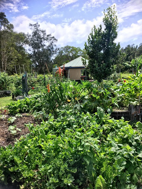 Yamba Community Gardens