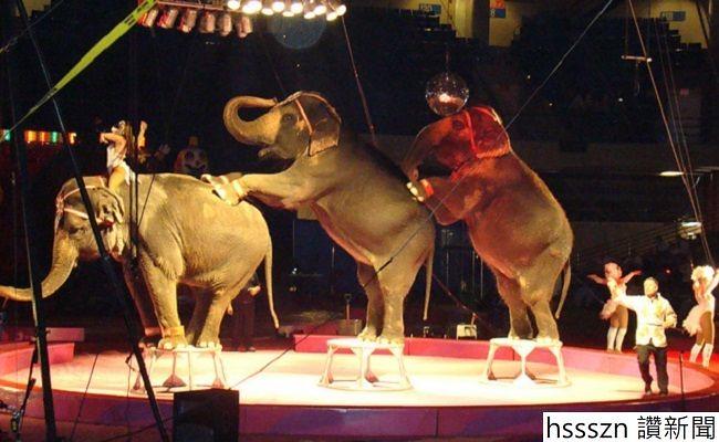 circus_650_400