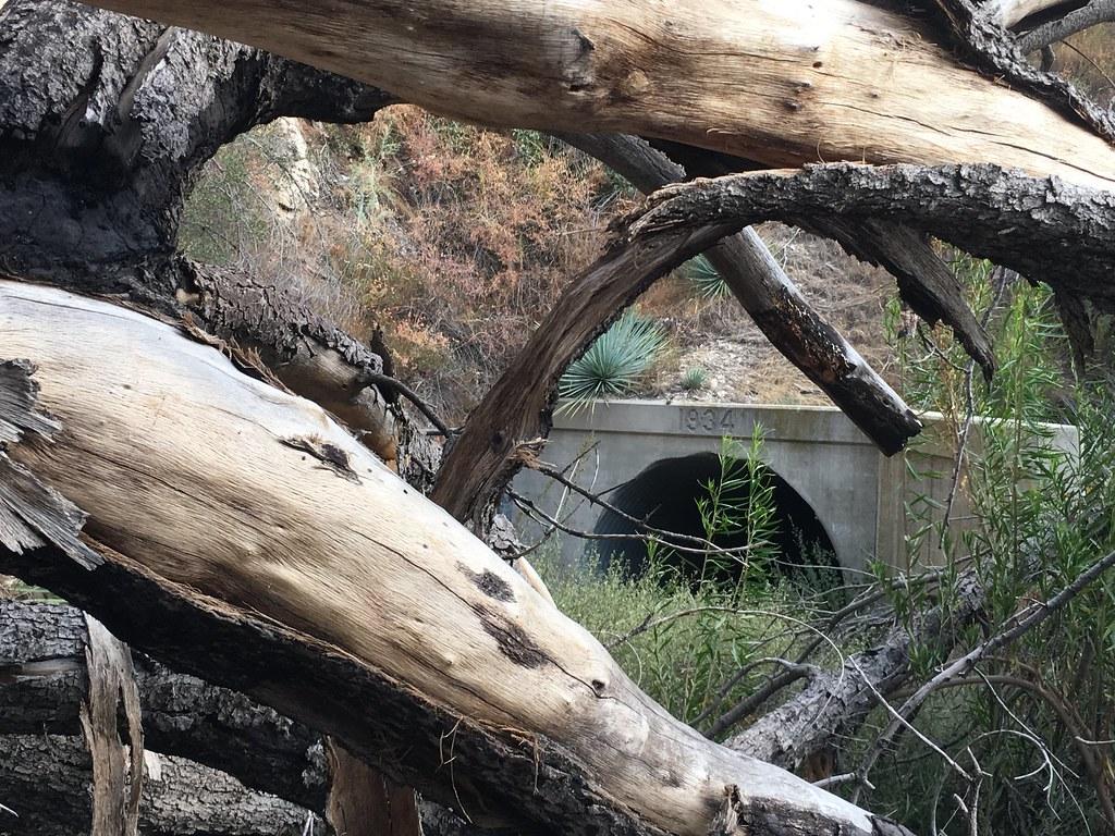 Ladybug Tunnel