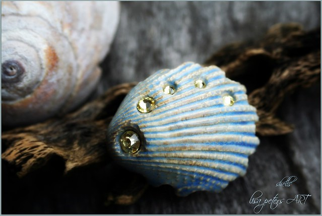 Porcelain Seashell