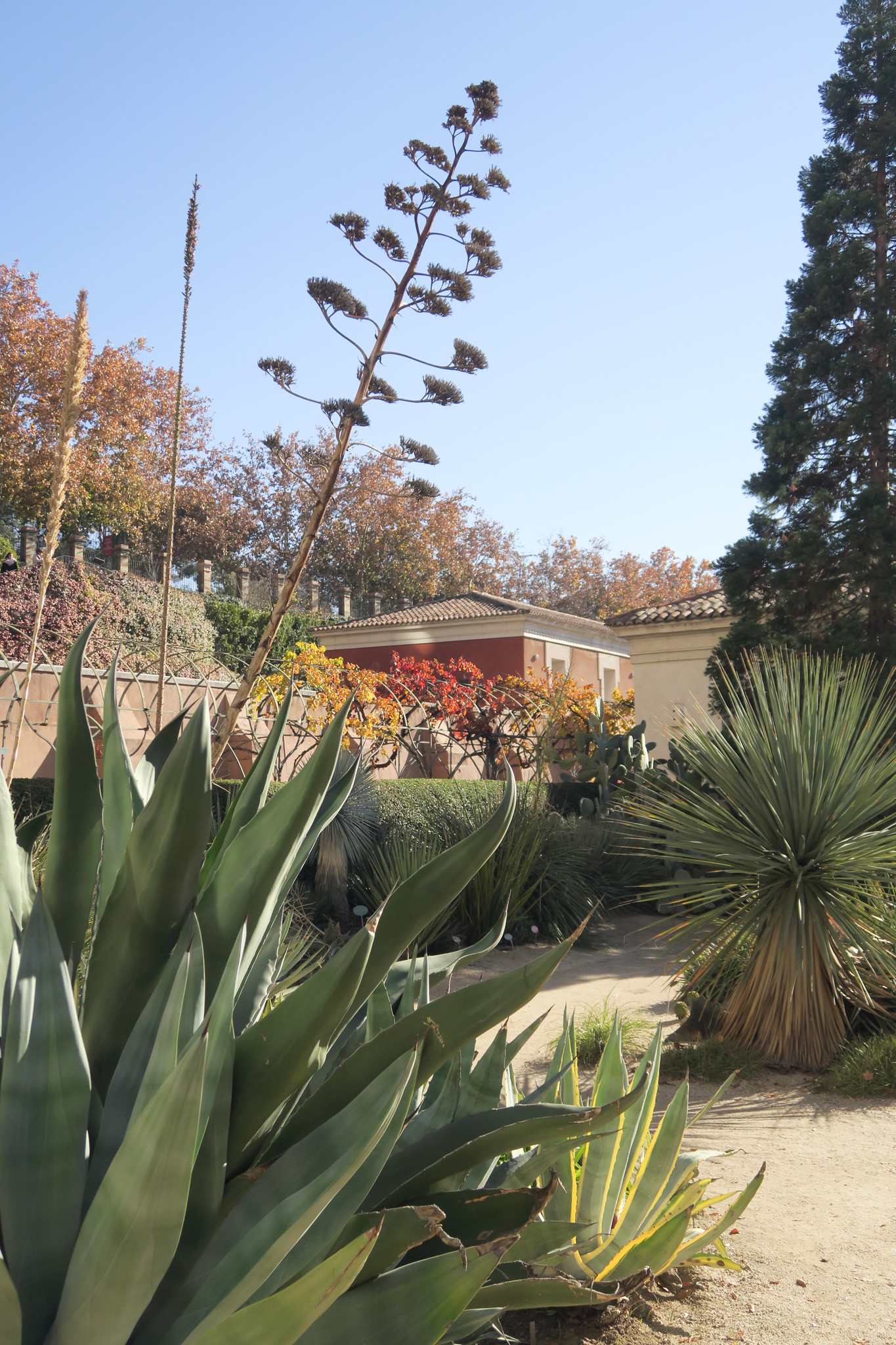 madrid, jardín botánico