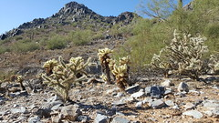 Phoenix Mountains Preserve.