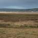SWCP: River Taw & Egret