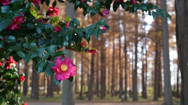 DSC05912水元公園