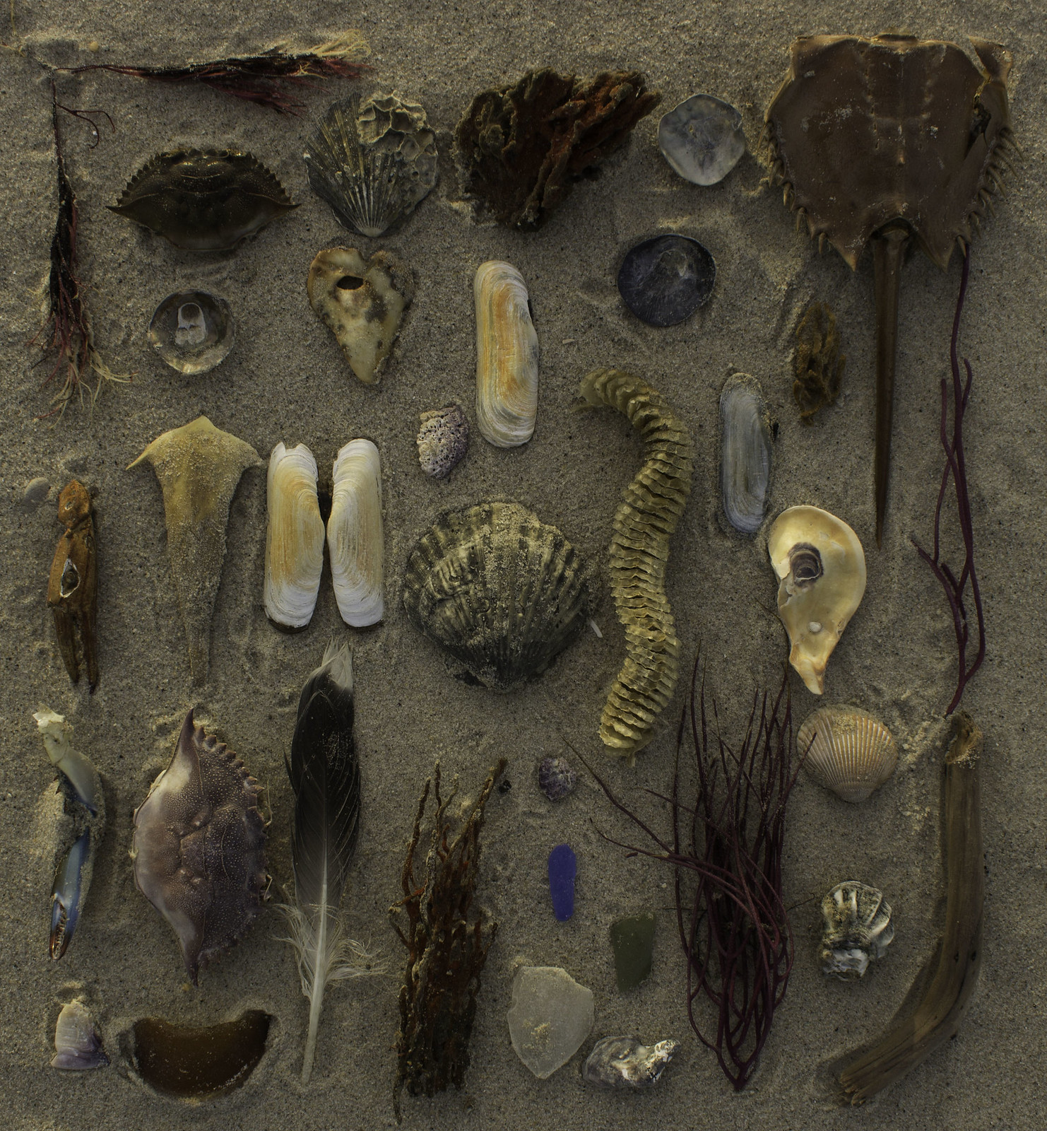 Tidal Treasures - Grandview Nature Preserve, Hampton, Virginia