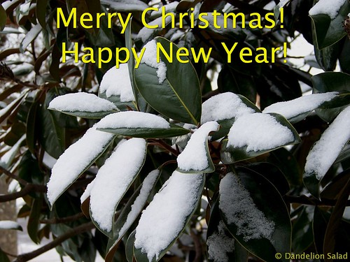 Merry Christmas--Snow on Christmas Eve on the Evergreen Magnolia Tree