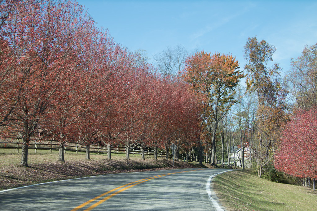 Autumn Trees near Kentuck Knob