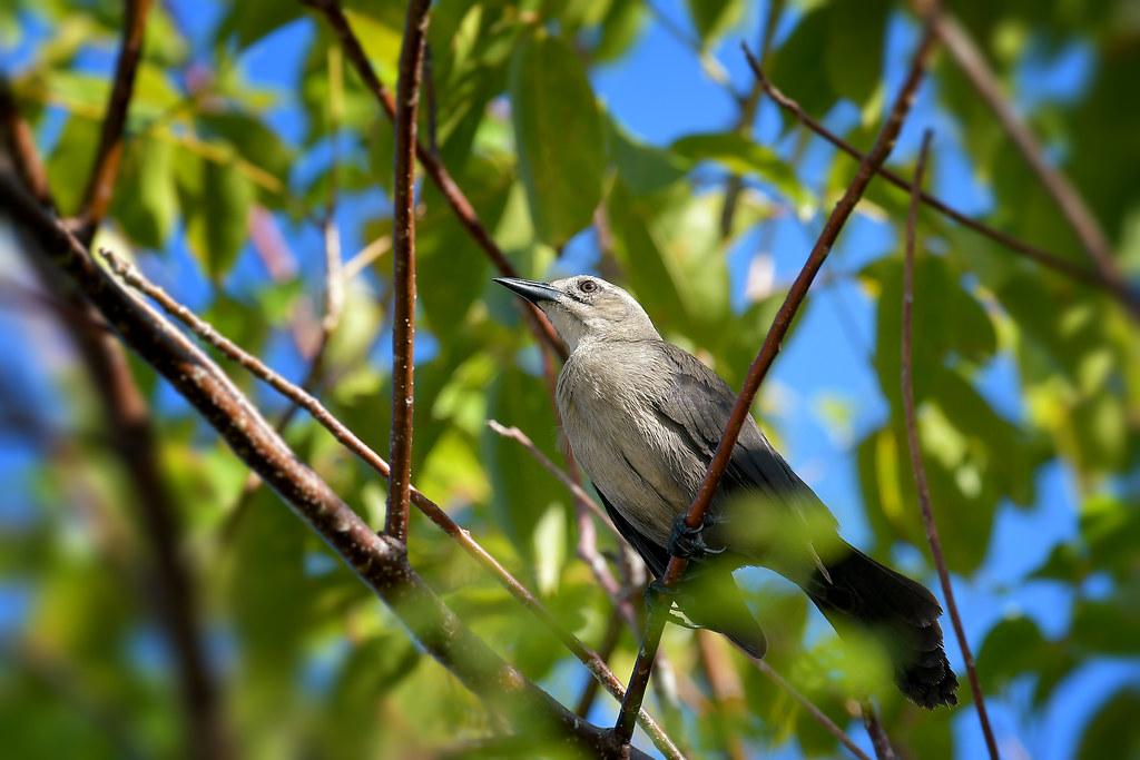 oiseaux exotiques  38626281325_03e5db1efa_b