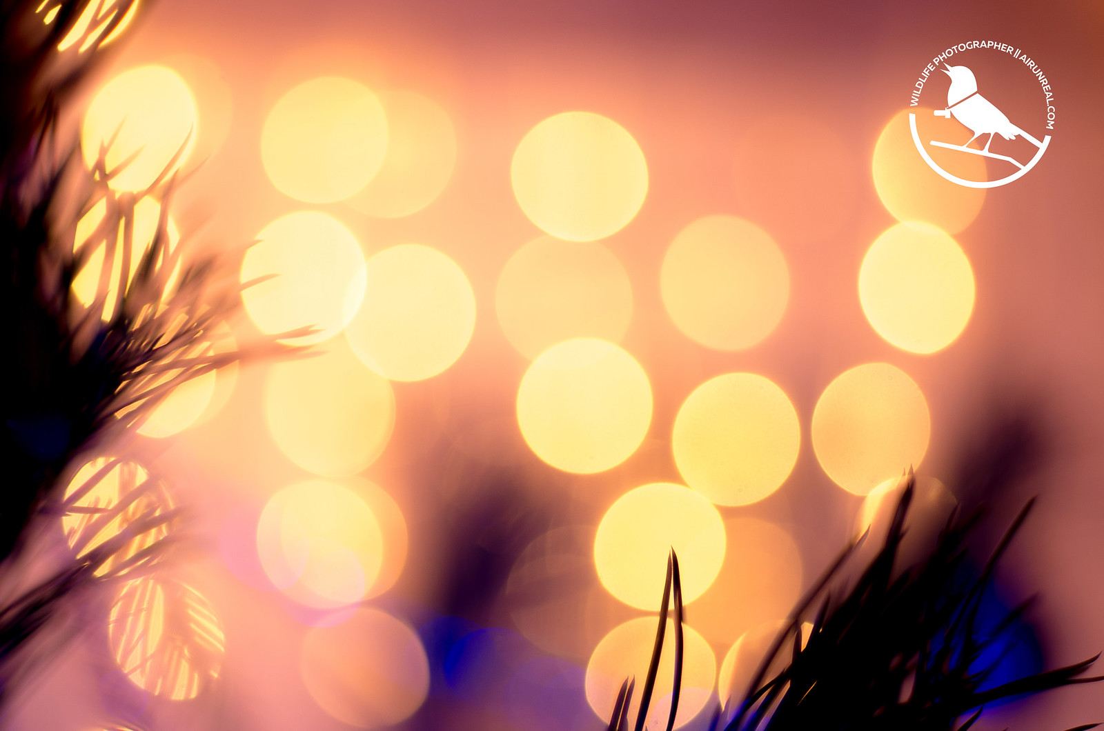 Christmas tree // 20171228