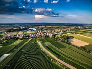 wineyards, trasdorf, lower austria