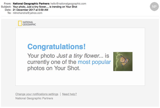 Your photo Just a tiny flower is trending on Your Shot