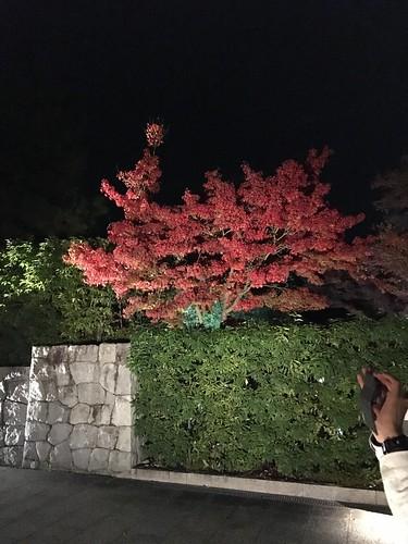 紅葉狩りwithピオニーand新保さんin嵐山