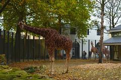 Artis Zoo [10/2011]