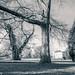 Kew -716122017-Edit.jpg