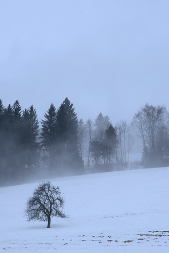 Winter Bachtel