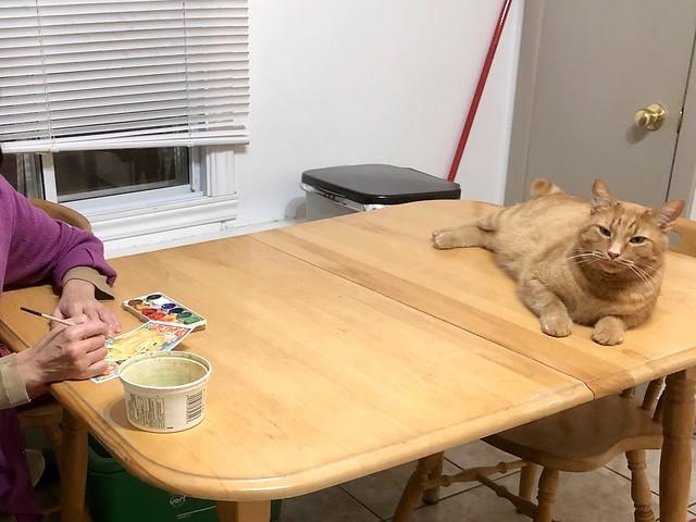 Un chat modèle / A model cat