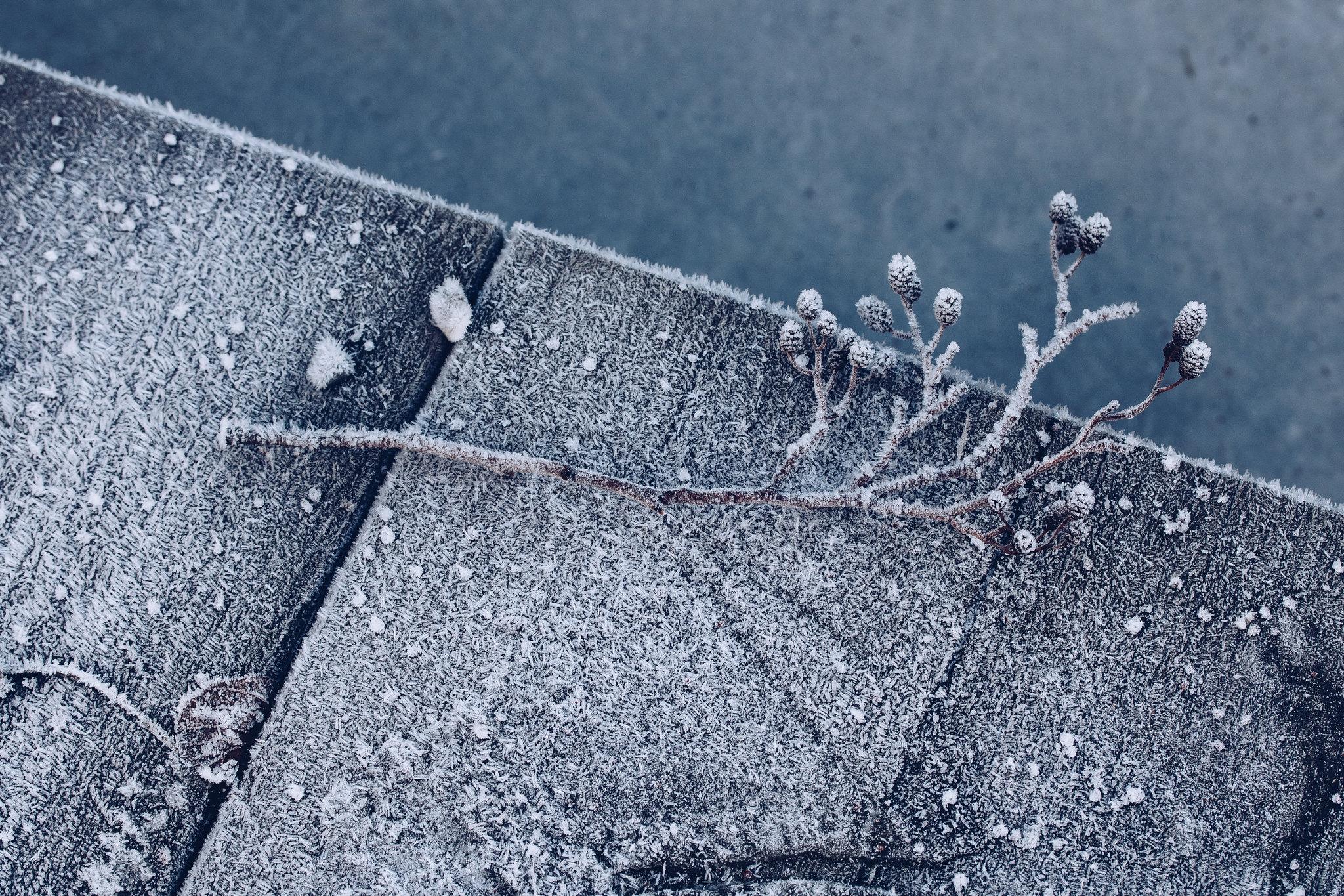 Frozen - reaktionista.se