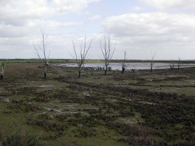 Flooded marsh land near Tollesbury