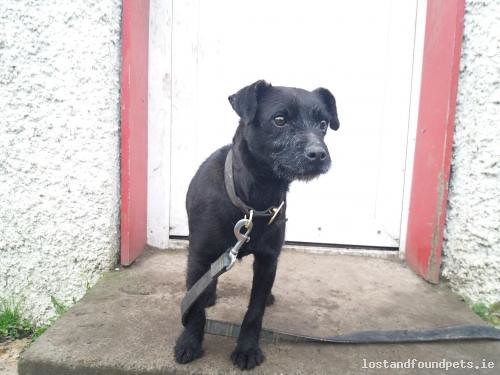 Sat, Dec 16th, 2017 Found Female Dog - Millbrook, Oldcastle, Meath