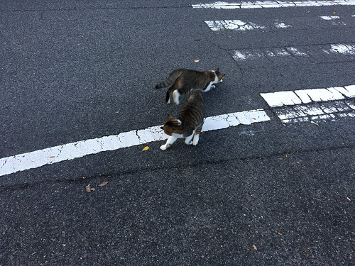 じゃれつくネコ(7)