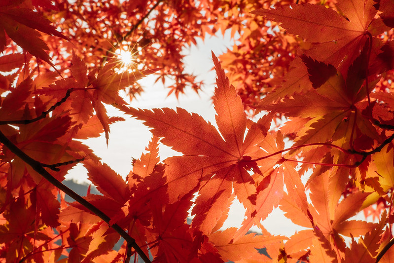 紅葉|Japan