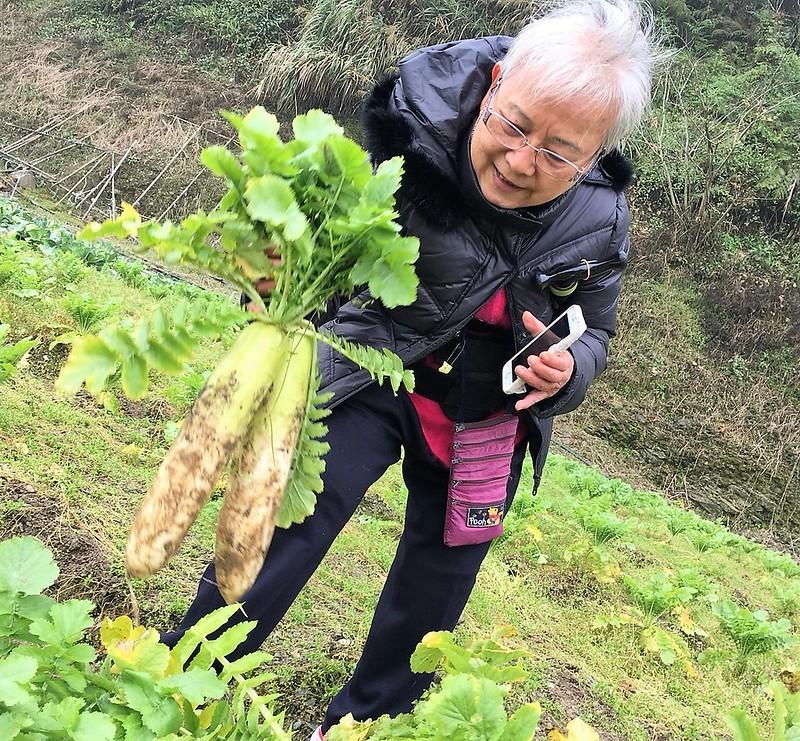 福山農場 高麗菜 (20)