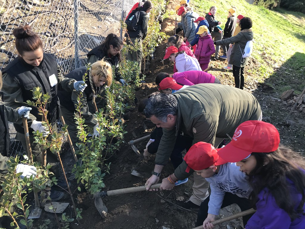 El Ayuntamiento de Coria y los colegios de la localidad reforestan la zonas quemadas en el Parque de Cadenetas