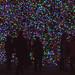 <p><a href=&quot;http://www.flickr.com/people/155657723@N06/&quot;>sjlovasic</a> posted a photo:</p>&#xA;&#xA;<p><a href=&quot;http://www.flickr.com/photos/155657723@N06/27916766739/&quot; title=&quot;Kennywood Christmas Lights&quot;><img src=&quot;http://farm5.staticflickr.com/4602/27916766739_77d7ba71f0_m.jpg&quot; width=&quot;240&quot; height=&quot;160&quot; alt=&quot;Kennywood Christmas Lights&quot; /></a></p>&#xA;&#xA;