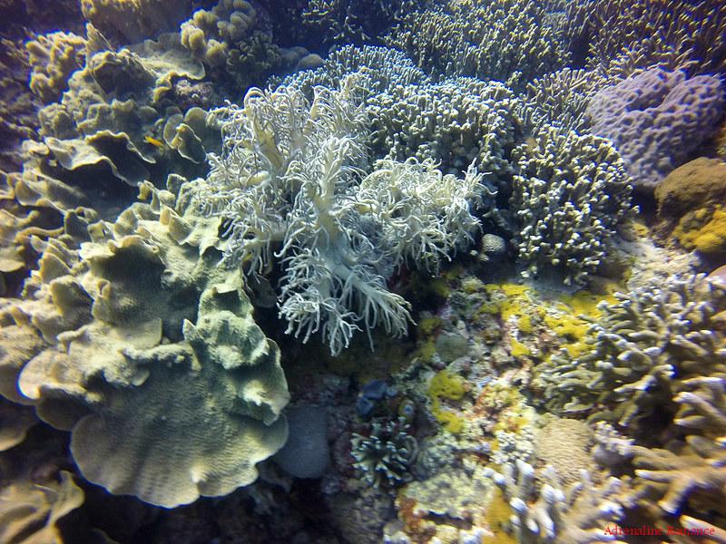 Weird corals