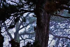 Dendrocopos medius - Photo of Sainte-Gemme