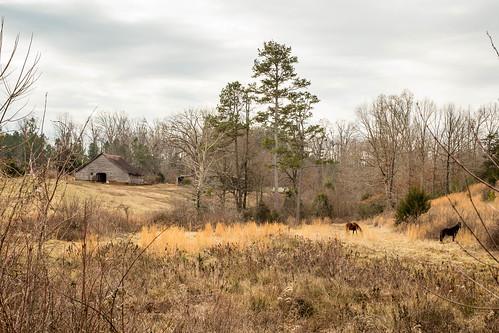 canon 6d sigma 50mm14 art lens upstate rural oconee southcarolina country farm barn road horse pasture southernlife rustic scenic vanishing southern america usa landscape pastorel