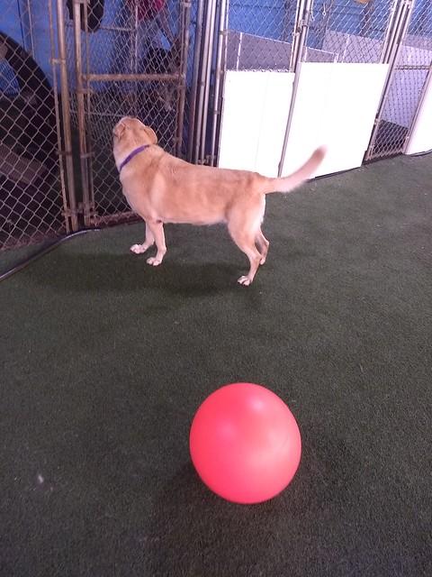 01/15/18 Indestructiball Chase! :)