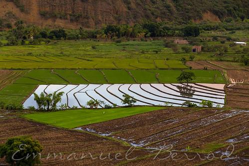 ameriquedusud landscapes paysages peru perutravel pérou southamerica voyageaupérou rizière paddyfield coucherdesoleil sunset jaén cajamarca pe