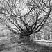 Kew -58  16022018.jpg