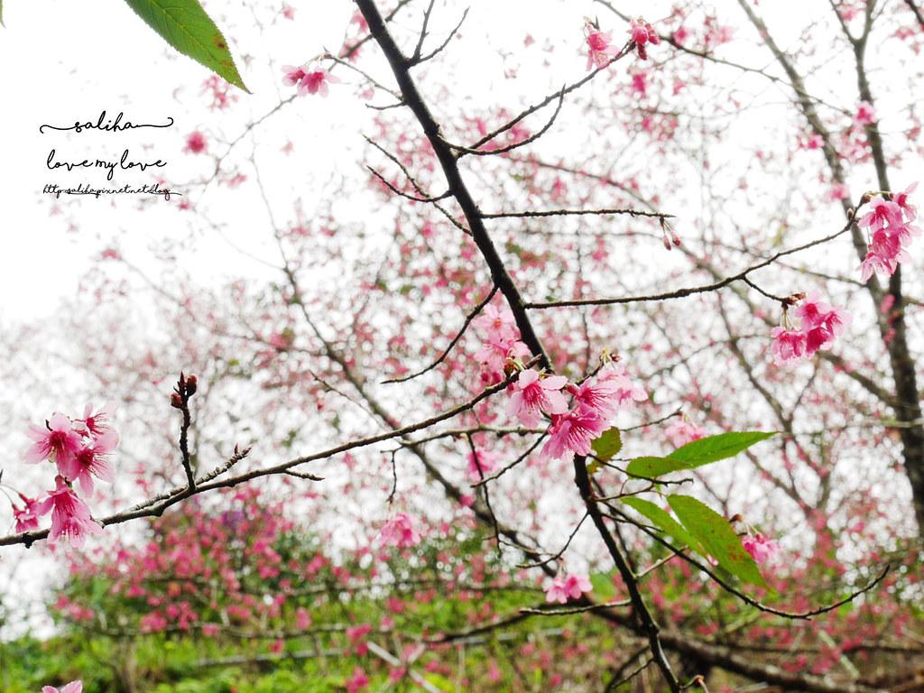 三峽一日遊景觀餐廳推薦花岩山林 (31)