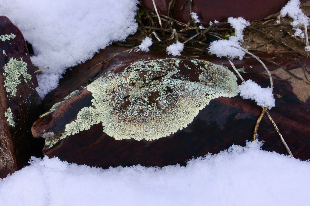 Snow and lichen