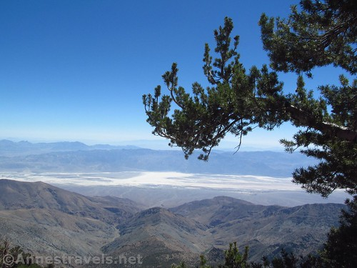 A bristlecone pine branch as a frame for Badwater Flats along the Telescope Peak Trail, California