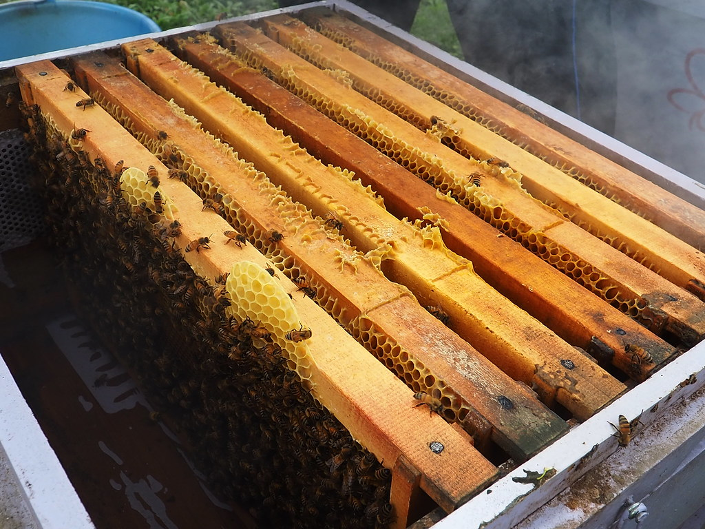 古坑三美養蜂 (12)